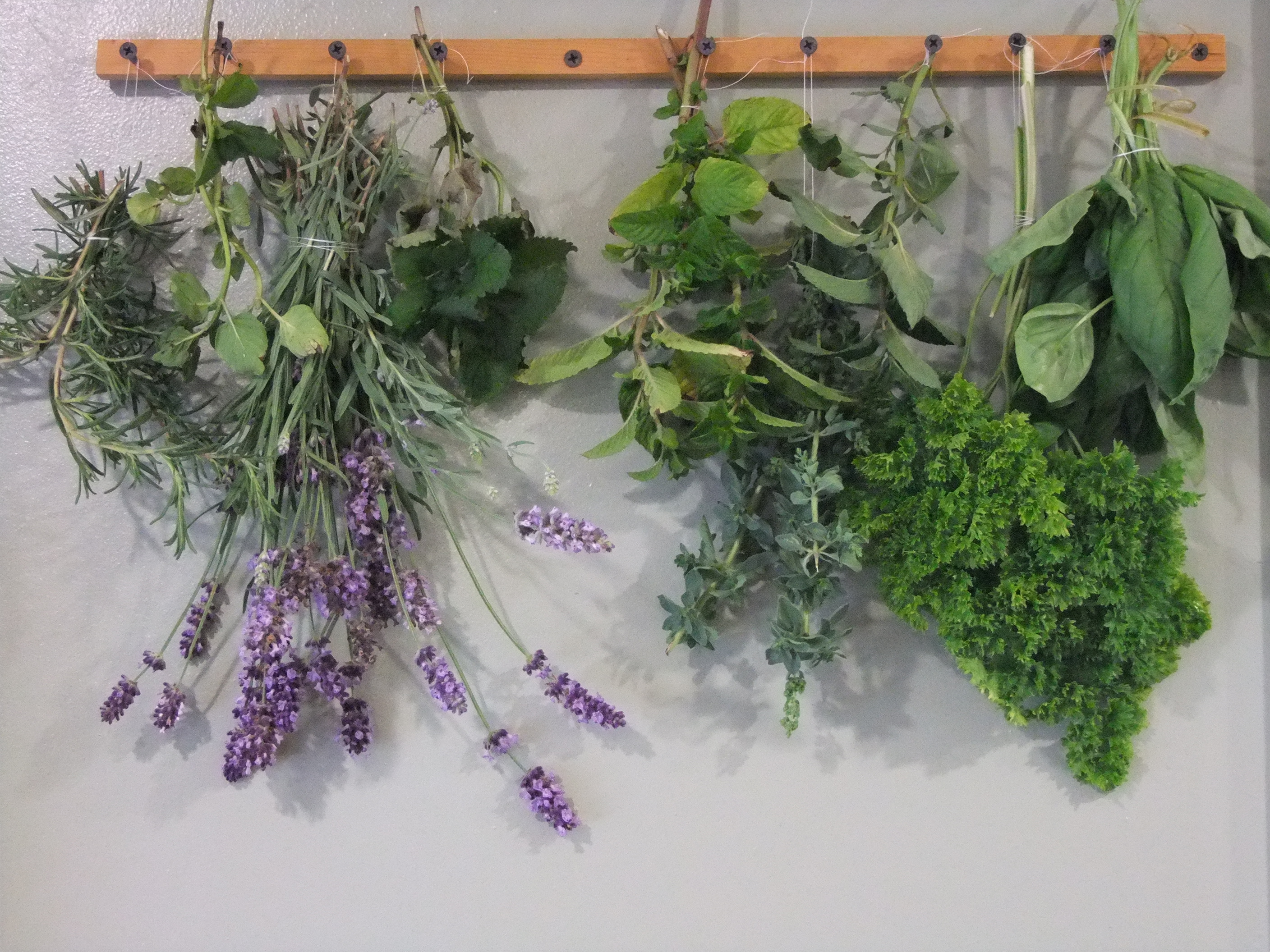 How To Make An Herb Drying Rack and Harvest Herbs